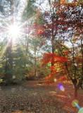 5750-Westonbirt sunlit woodlands-web.jpg