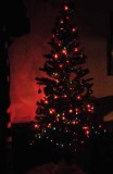 Our Italian Christmas Tree