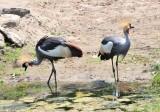 Decorative Cranes