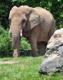 Here Comes Elephant