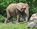 Nice Elephant