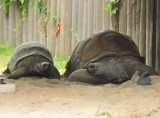 Tortise Race