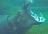 Fierce Tusks