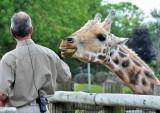 Giraffe Kiss?