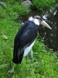 Not A Pretty Stork