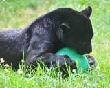 Gnawing On Ball