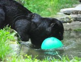 Taking Ball into Water