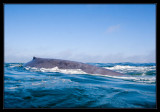 Blue Whale Video - YouTube