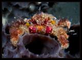 Decorator Crab on the tube