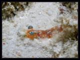 Shrimp macro