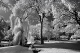 Boston Public Gardens - Infrared Perspective
