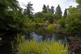 Pond in QE Park