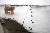 Are those my footprints?