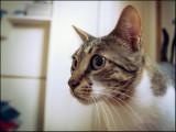 cat_1020828c.jpg