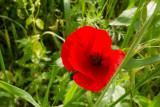 windflower_1050265w.jpg