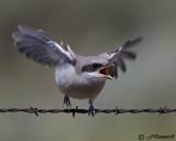 Mixed Bird Species