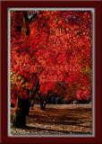 Fiery Red Meadow