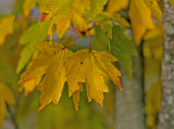 leaves_of_autumn