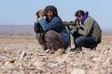 Birding in Morocco with Audouin Birding tours.