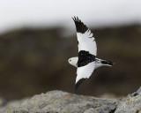 Birding in Svalbard