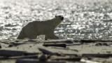 Mammals of Svalbard