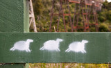 Painted Sheep on a Fence