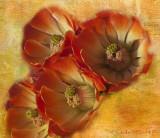 Hedgehog Cactus Flowers