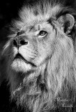 THE KING-4247bw.jpg