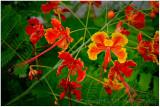 Flower colours.