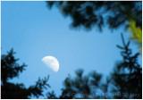Half moon trees.