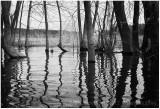 Spring flood plain.