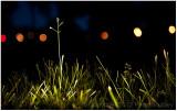 Night grass.
