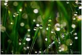 Sparkly dew.