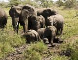 Elephant family enjoying a mud hole