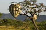 Hot Air Balloons over Serengeti