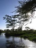 Morning light - Ndutu