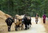 820_LR_P1010747 herders copy-s-.jpg