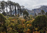 820_YH_Landscape on the way from Thimphu to Punakha_MG_1614b-s-.jpg