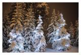 christmas lights Lake louise #1