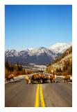 jasper traffic jam #2