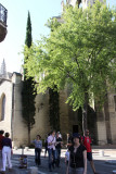 IMG_3556.jpg Avignon