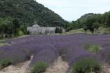 IMG_3829.jpg Abbaye de Senanque