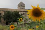 IMG_3964.jpg St Remy de Provence