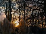 2008-01-04 Forrest