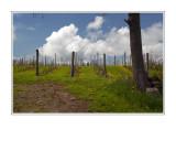 Annapolis Valley Vineyards