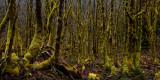 Elfin Forest Above Baker River Trail  (BkrRivSulphideCr042511-79.jpg)*