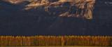 Poplars & Cliffs  (T3_102911-236-5.jpg)