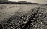Columbia Lake, Headwaters Of The Columbia River  (ColumbiaLk_J_051512_044-1.jpg)