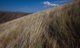 Manastash Ridge  (BTcd2_071812-110-9.jpg)