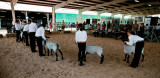 Walla Walla County Fair (SE_WA_083112_1206-13.jpg)